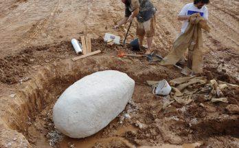 fóssil achado no Paraguai