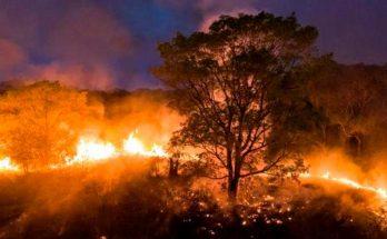 Ajuda ao Pantanal