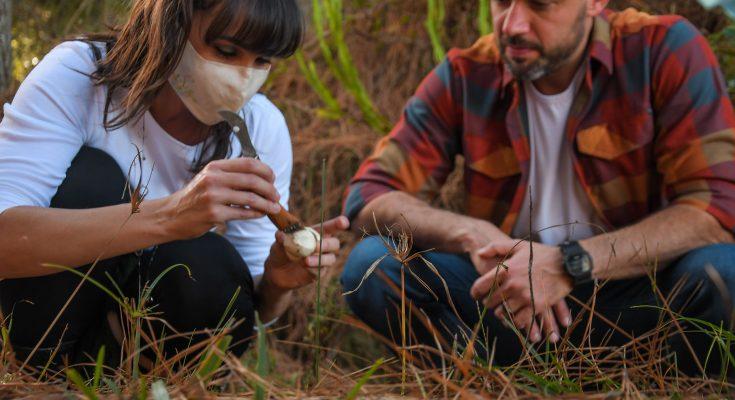 Caçada aos cogumelos selvagens em Cambará do Sul